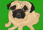 (A79) Fawn Pug Sitting / Green Background