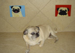 Photo of Daisy with her new tiles.  Courtesy of Linda R., Simi Valley, CA