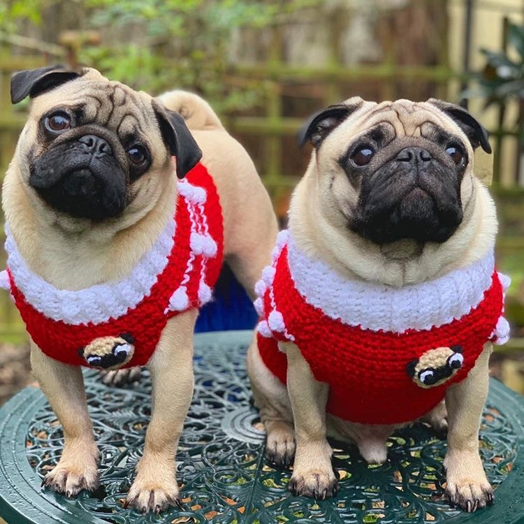 0dac06b306a Pug and Dog Breed Art Gifts for Dog Lovers - Newsletter
